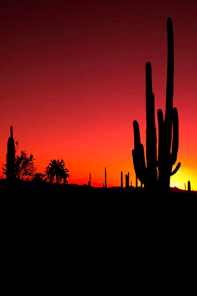 Sunset just after a dustr storm at Saguaro National Park West just outside of Tucson